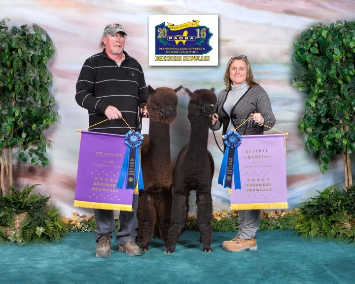 CCNF Skyhawk and Elf-Paca Meadows Skor taking Color Champion and Reserve Color Champion at the PAOBA Show!